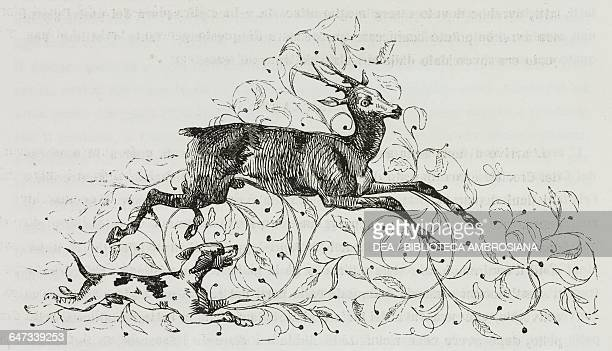 Roe deer being chased by a hunting dog illustration from The Liberation of Jerusalem by Torquato Tasso canto V Volume 1 with historical notes by...