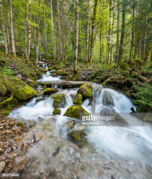 Roethbach with mossy stones, river at the end of Roethbach waterfall, Salet am Koenigssee, National Park Berchtesgaden, Berchtesgadener, Upper Bavaria, Bavaria, Germany