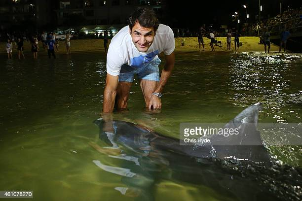 Roger Federer enjoys time off Brisbane International 2015 feeding wild dolphins on Tangalooma Island Resort on January 6 2015 in Brisbane Queensland...