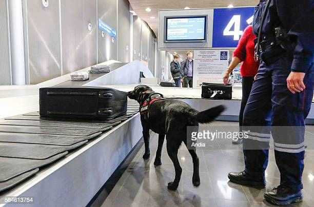 Roissy Charles de Gaulle Airport 2007 customs officer and drug detector dog looking for narcotics in the luggage on the conveyor belt The French...