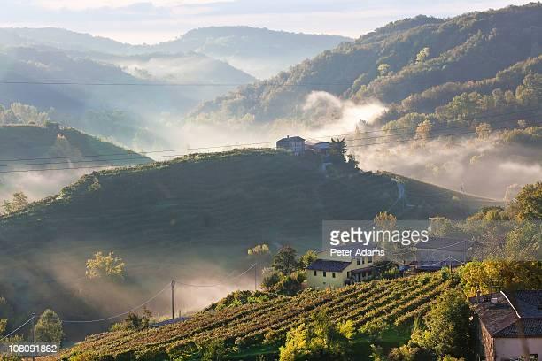 Rolle Locality, Prosecco Vineyards, Veneto, Italy