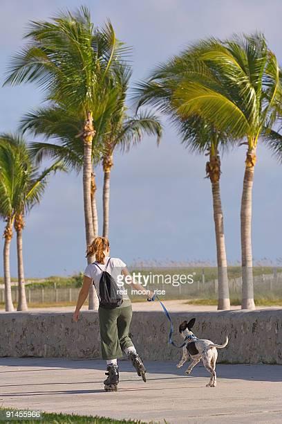 ローラー少女と犬 - キービスケイン ストックフォトと画像