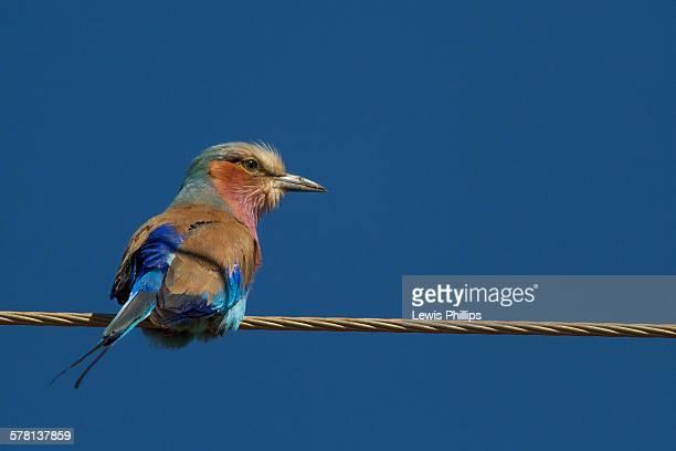 Vögel Stromleitung Stock-Fotos und Bilder | Getty Images