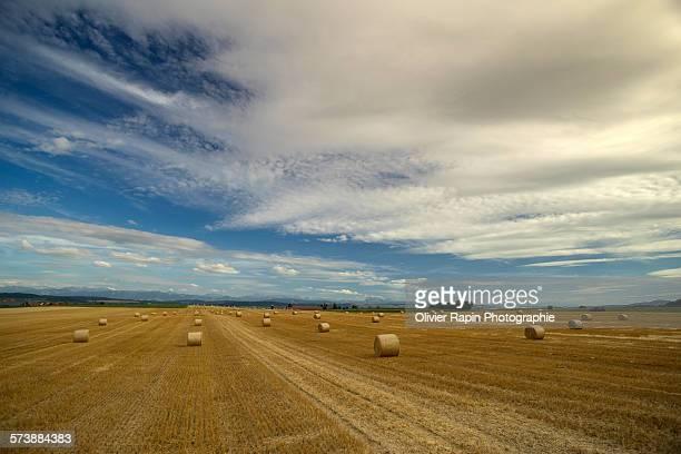 Rollers on field