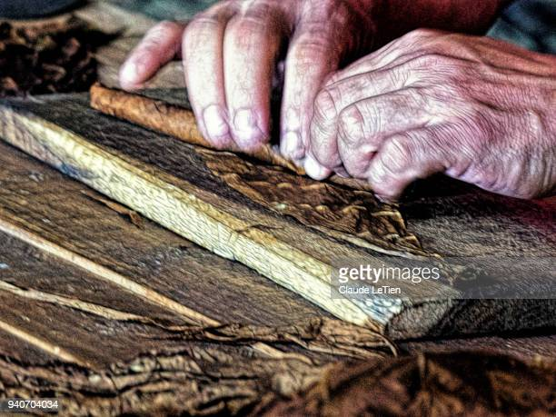 rolling a cigar - pinar del rio stock photos and pictures