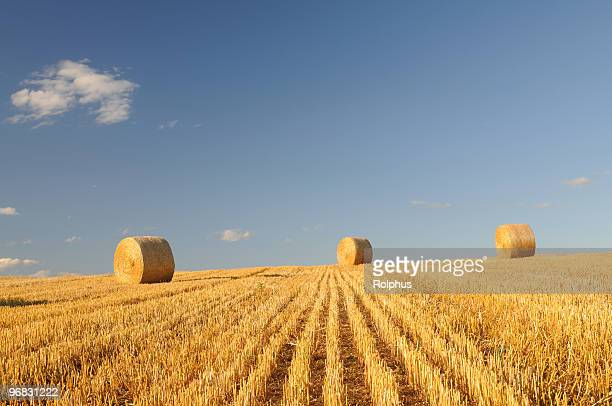 rolling bales of straw aichtal germany - sonnig stock pictures, royalty-free photos & images