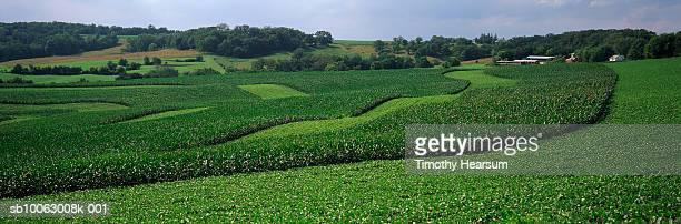 rolling corn and soybean fields - timothy hearsum stockfoto's en -beelden
