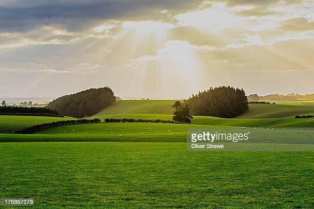 Rolling farmland of Central Otago