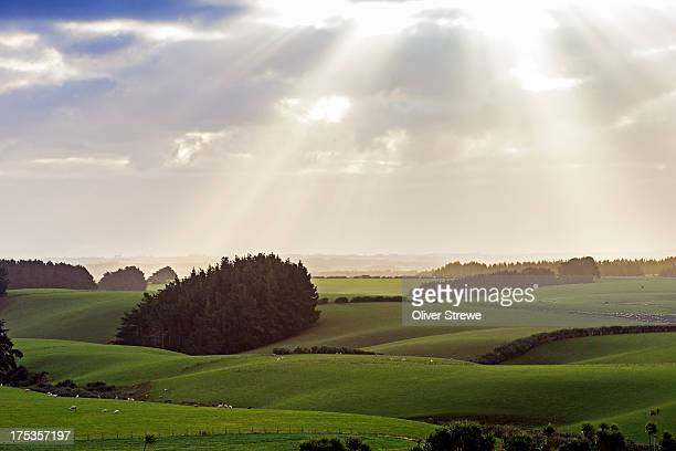 rolling farmland - invercargill stock pictures, royalty-free photos & images