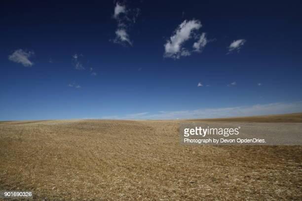 rolling field under blue sky after harvest - 休耕田 ストックフォトと画像