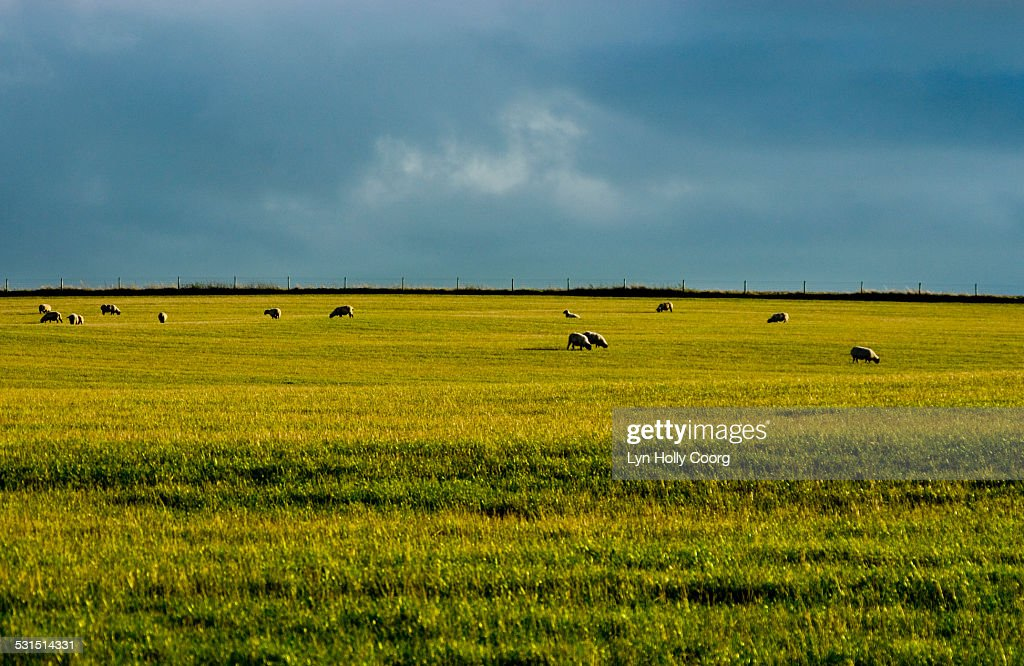 Rolling fields and sky in Great Britain : Stock Photo