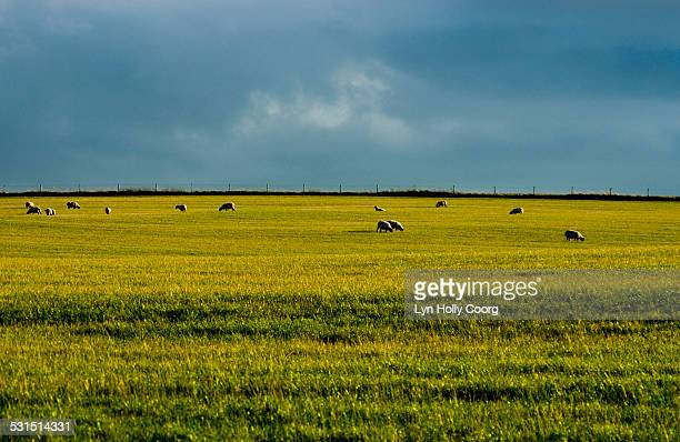 rolling fields and sky in great britain - lyn holly coorg stock pictures, royalty-free photos & images