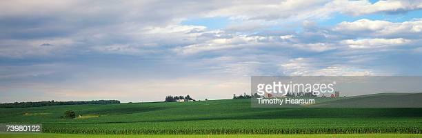 rolling fields of corn with farm buildings on skyline - timothy hearsum stock pictures, royalty-free photos & images