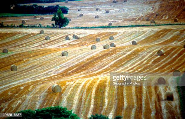 Rolling fields with bales of straw from Eggardon Hill, Dorset, England, UK.