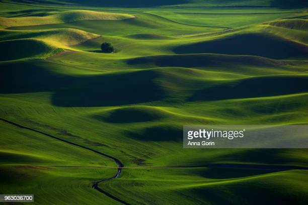 Rolling green hills of Palouse countryside in spring seen from Steptoe Butte State Park at sunset, Washington state