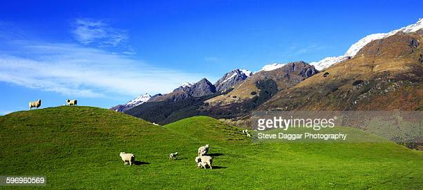 Rolling green hilss with sheep and mountains
