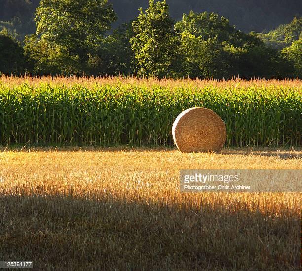 Rolling haystack