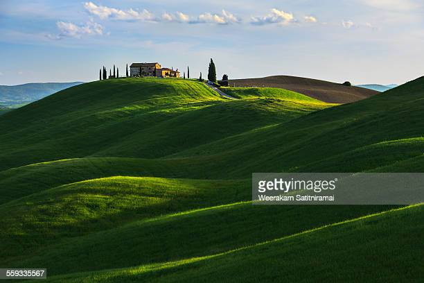 rolling hill near asciano, tuscany. - siena italy stock photos and pictures