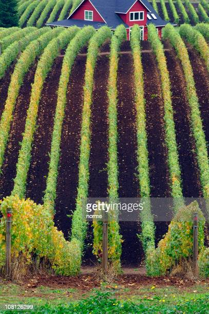 rolling hill with farm house and vines - pinot noir grape stock photos and pictures