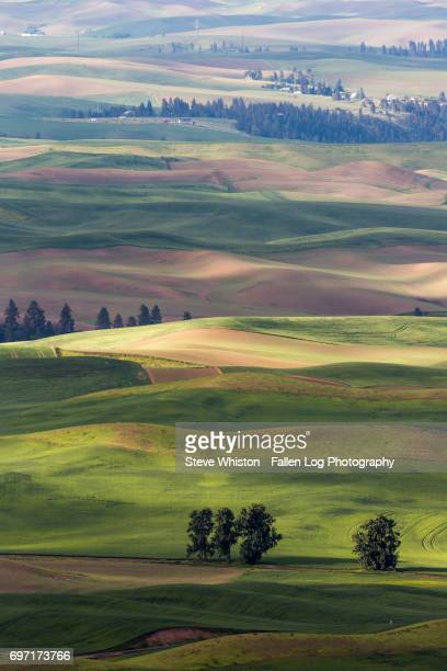 Rolling Hills and Farmland of the Palouse