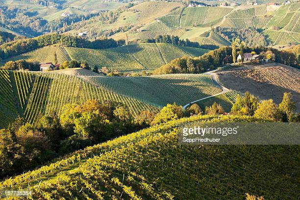 Wein yard in Steiermark Österreich