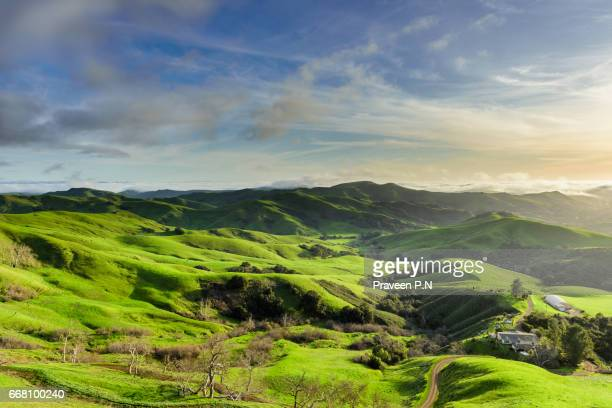 rolling hills of green valley, paso robles - lush stock pictures, royalty-free photos & images