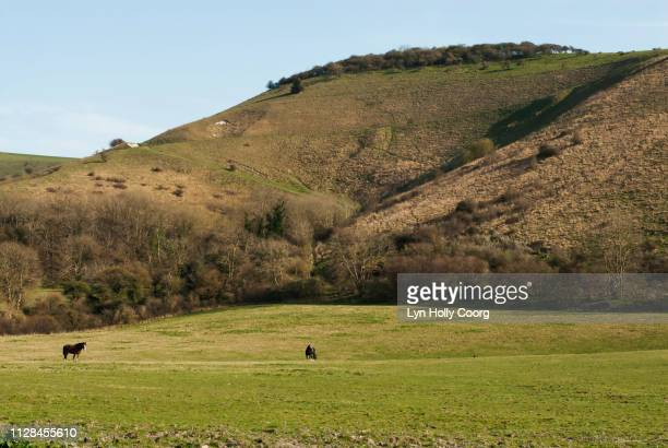 rolling hills of sussex in british countryside - lyn holly coorg stock photos and pictures