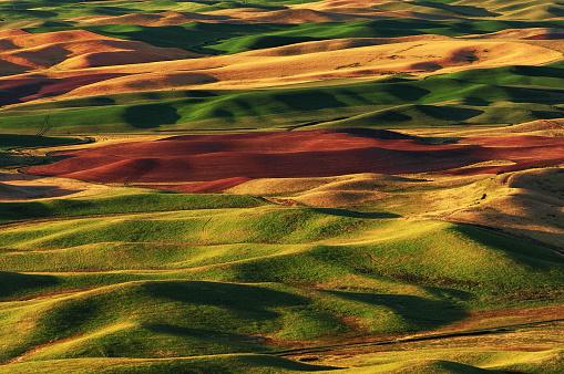 Rolling Hills of the Palouse, Washington, USA - gettyimageskorea
