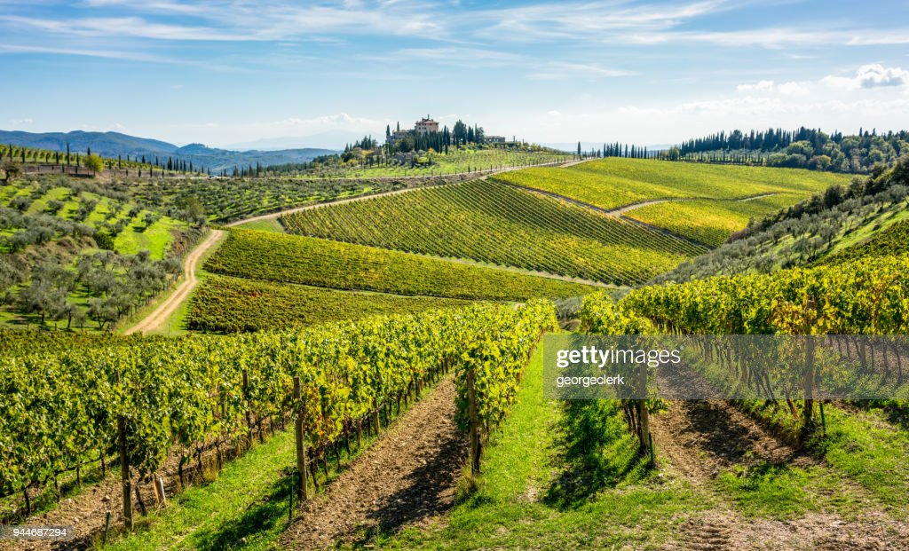 Rolling hills of Tuscan vineyards in the Chianti wine region : Stock Photo
