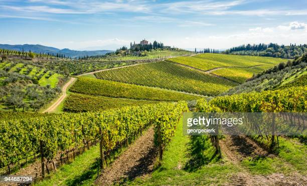 rolling hills of tuscan vineyards in the chianti wine region - italia foto e immagini stock