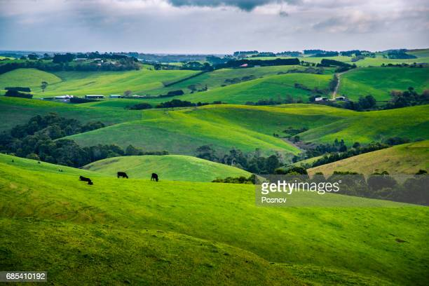rolling hills of victoria gippsland - rolling stock pictures, royalty-free photos & images
