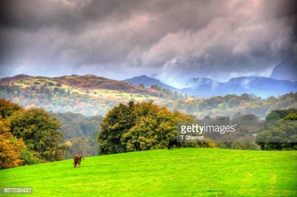 rolling hills - hügelkette stock-fotos und bilder
