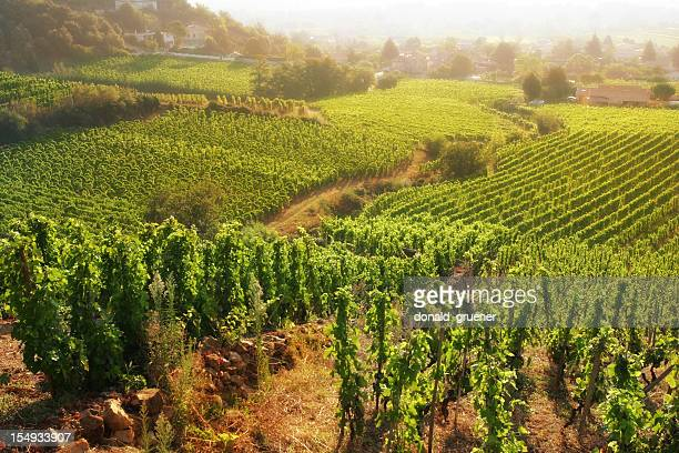 rolling hillside vineyards - rhone stock pictures, royalty-free photos & images