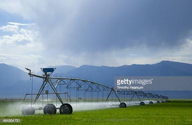 rolling irrigation mechanism sprays alfalfa field - timothy hearsum stock-fotos und bilder
