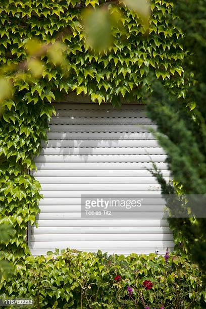 A rolling shutter surrounded by ivy