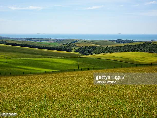 Rolling South Downs in the summer