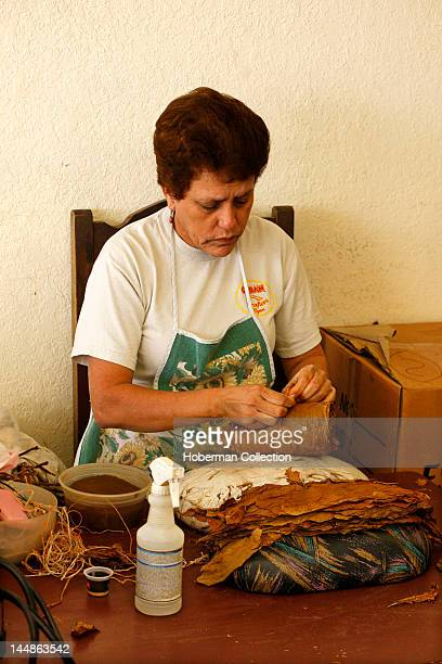 Rolling Tabacco Leaves Cuban Crafters Miami