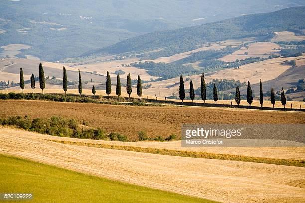 rolling tuscan countryside - marco cristofori fotografías e imágenes de stock