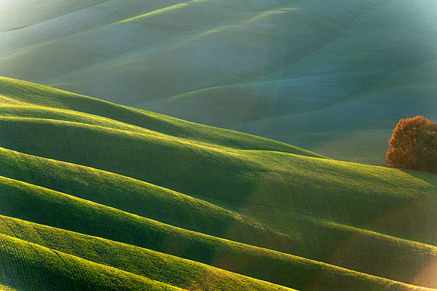 Rolling Tuscany Landscape At Evening Sunlight,Val D'orcia, Italy Wall Art
