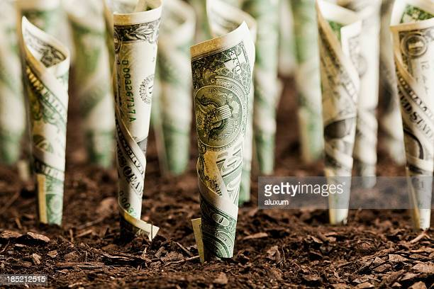 Rolls of dollar bills planted on soil as investment