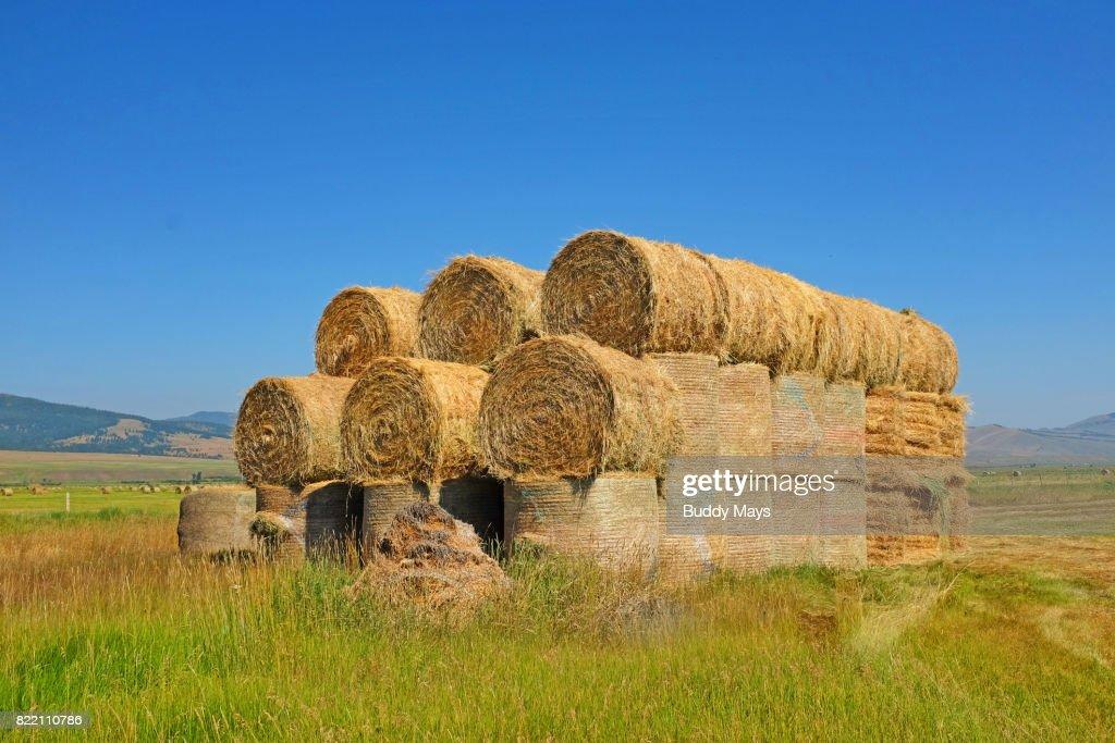 Rolls of Hay in a field : Stock Photo