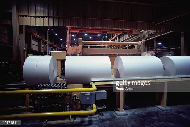 BUSIN029 Rolls of paper in a paper factory