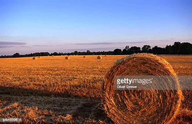 rolls of straw in fields along highway 26., georgia, united states of america, north america - georgia country stock pictures, royalty-free photos & images