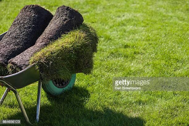 Rolls of turf in garden wheelbarrow