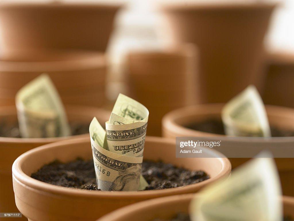 Rolls of twenty dollar bills growing in flowerpots : Stockfoto