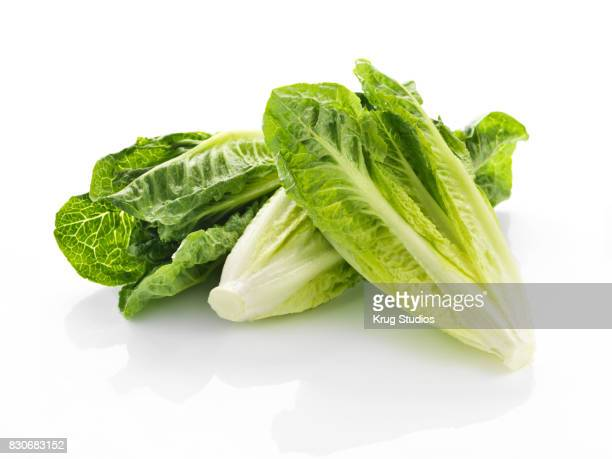romaine hearts - romaine lettuce stock photos and pictures