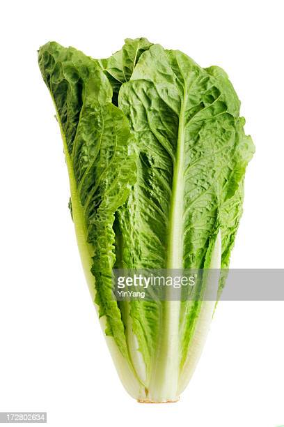 romaine lettuce, fresh raw green leaf vegetable isolated on white - leaf lettuce stock pictures, royalty-free photos & images