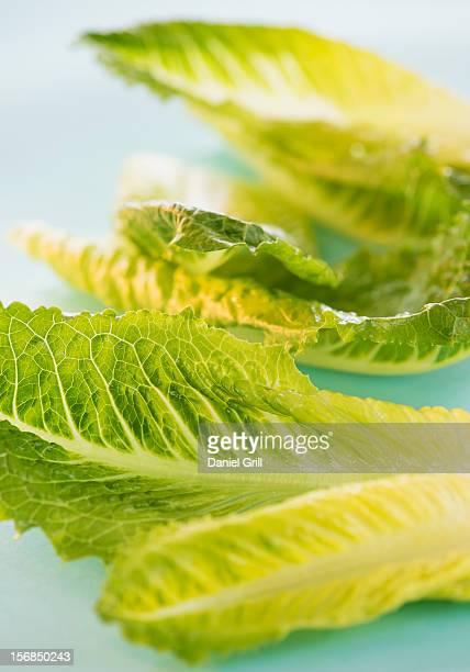 Romaine Lettuce leaves, studio shot