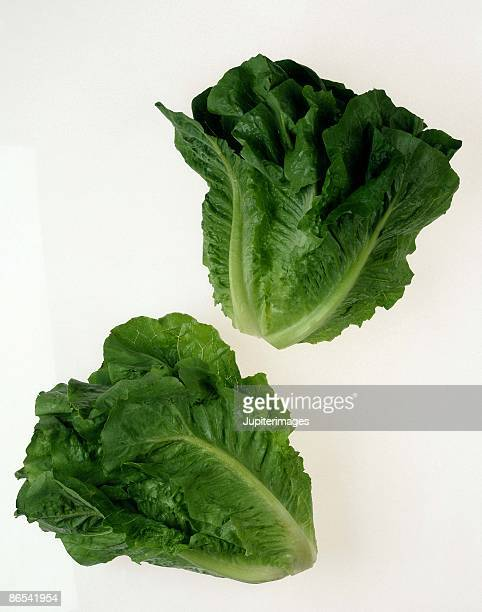 romaine lettuce - romaine lettuce stock photos and pictures