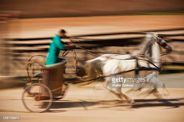 Roman Army and Chariot Experience
